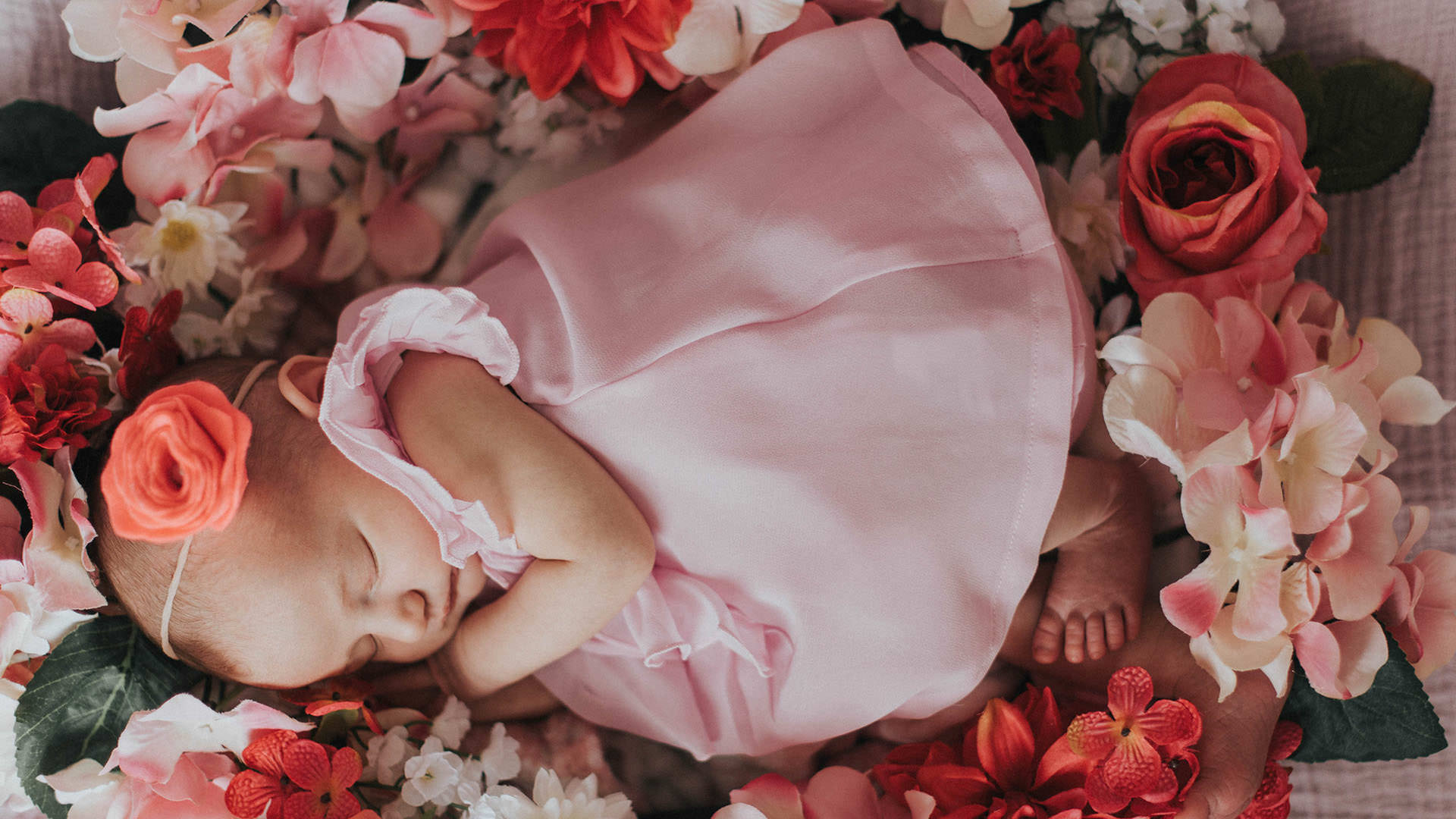 Baby lying in a bed of flowers during a newborn photography session in Greenville,SC.
